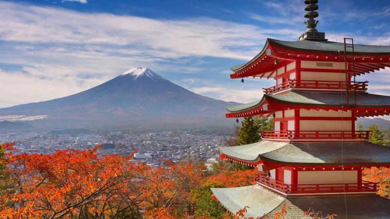 Vận chuyển tôm tươi đi Nhật Bản bằng đường hàng không